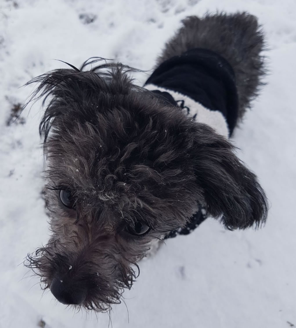 Coco The Pooch Express dog walking and puppy visits