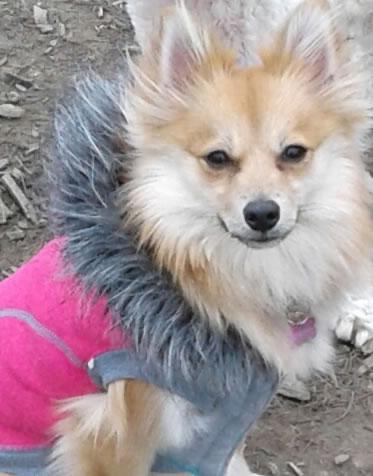 Jade The Pooch Express dog walking and puppy visits